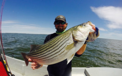 Summer Hybrid Striper Report May 22, 2017