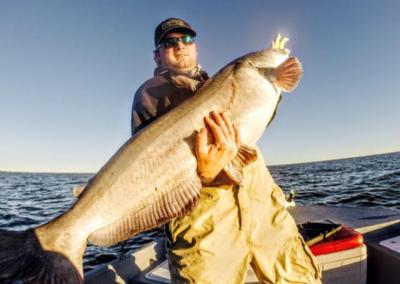 PicturesofBigBlueCatfish-104